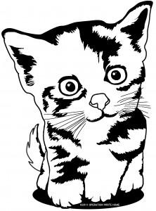 OWH-kittencute
