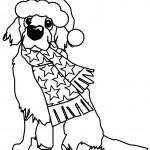 owhbluechristmasdog