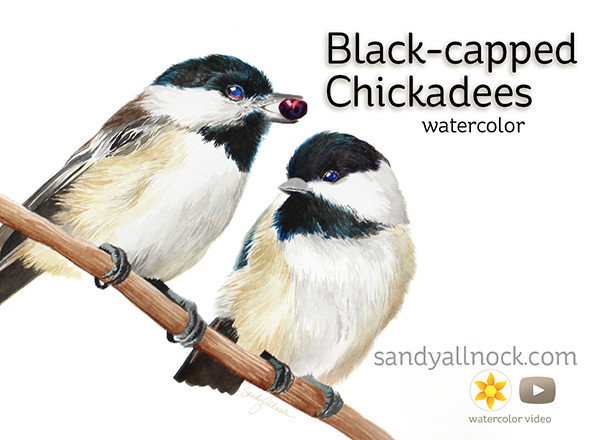 Sandy Allnock Black Capped Chickadees