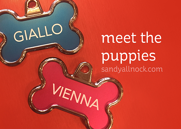 Meet the puppies! (and Yule Dogs II) (and winner!)
