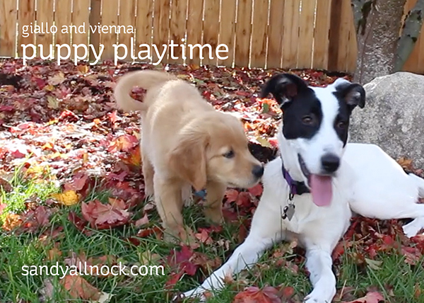 Puppy Playtime – and a couple updates