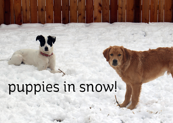 Puppies wrestling in the snow! (and a freebie with a purchase!)