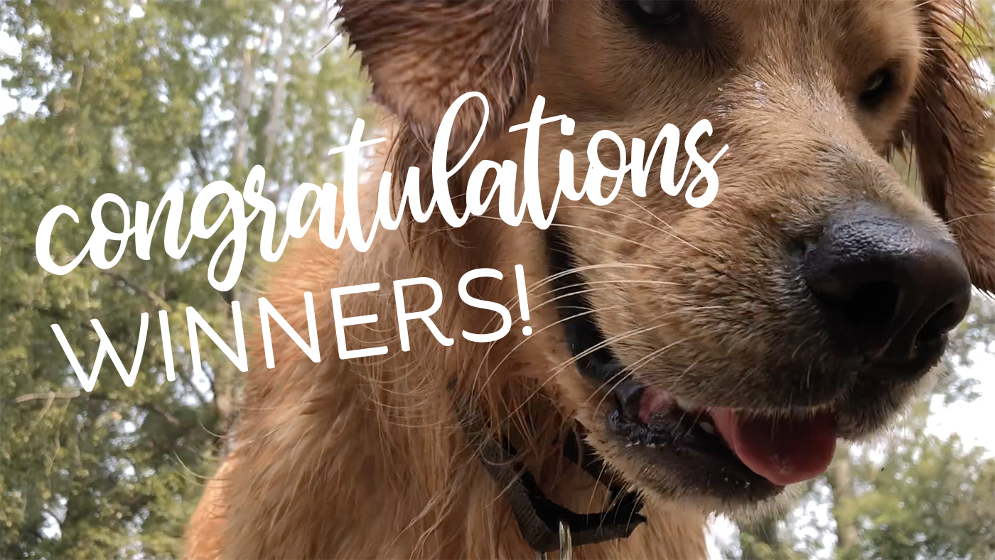 Dogvlog – everyone is a WINNER!