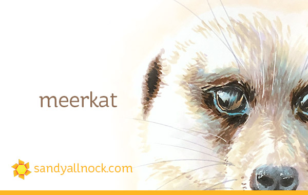 Copic Meerkat