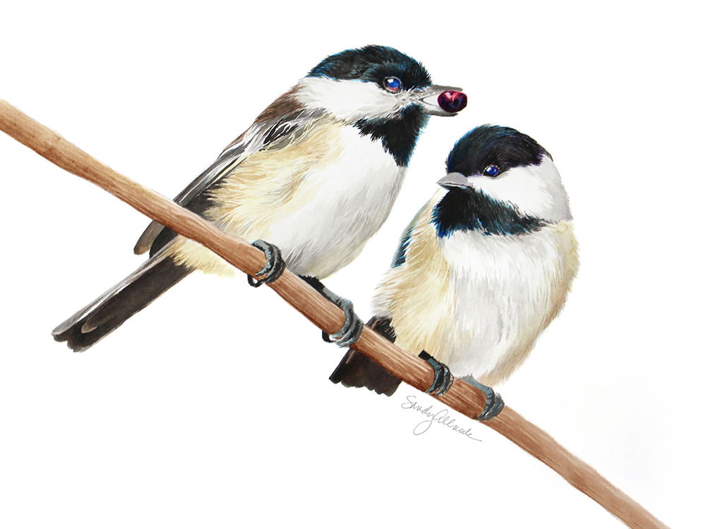Two chickadee birds painted by artist Sandy Allnock
