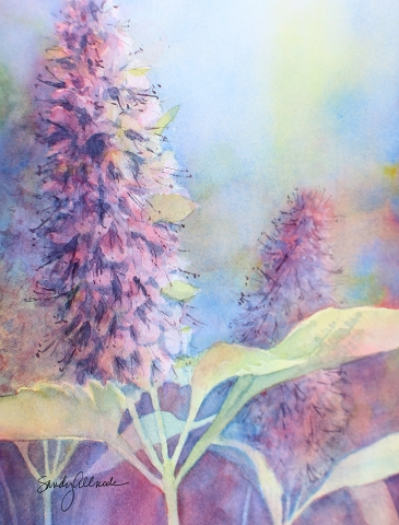 Purple hyssop flowers in watercolor, painited by artist Sandy Allnock