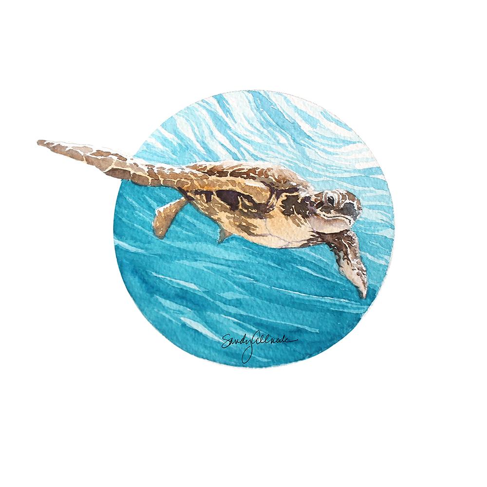 Sea turtle painting in watercolor by artist Sandy Allnock