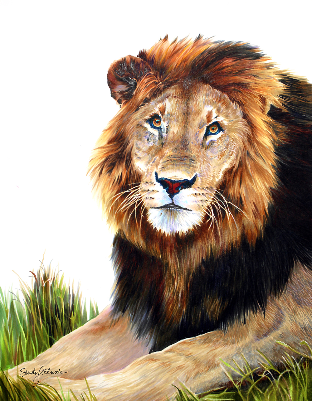 Detailed lion drawing in Copic marker by artist Sandy Allnock