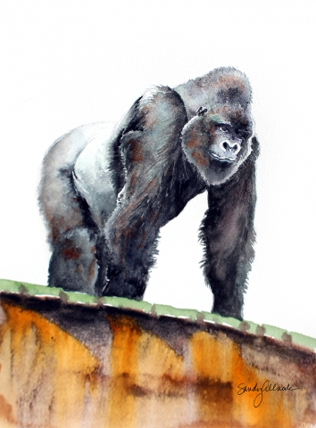 Gorilla in zoo painted in watercolor by artist Sandy Allnock