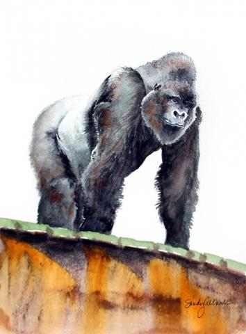 Gorilla in zoo painted in watercolor by artist Sandy Allnock