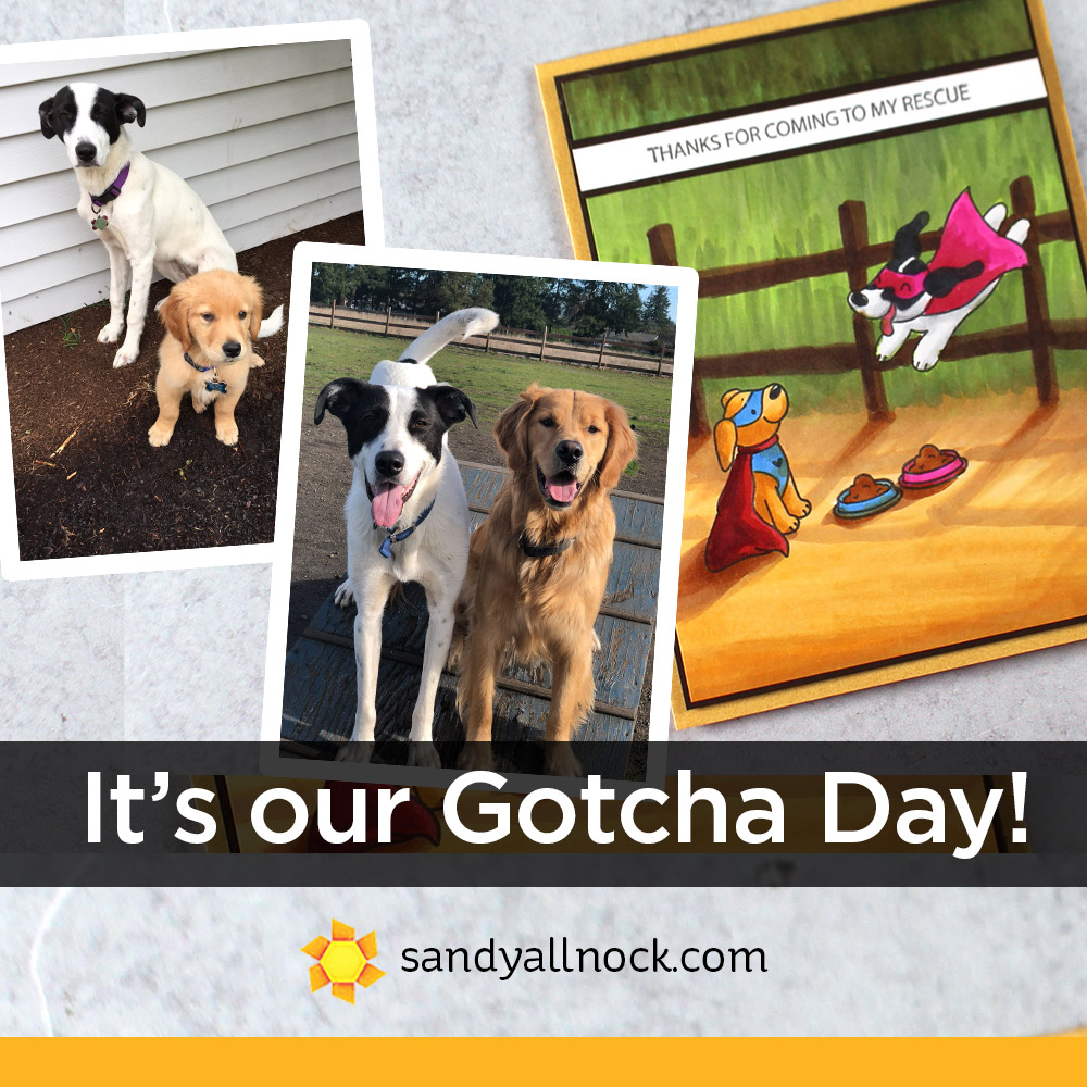 Gotcha Day Card and Pups!