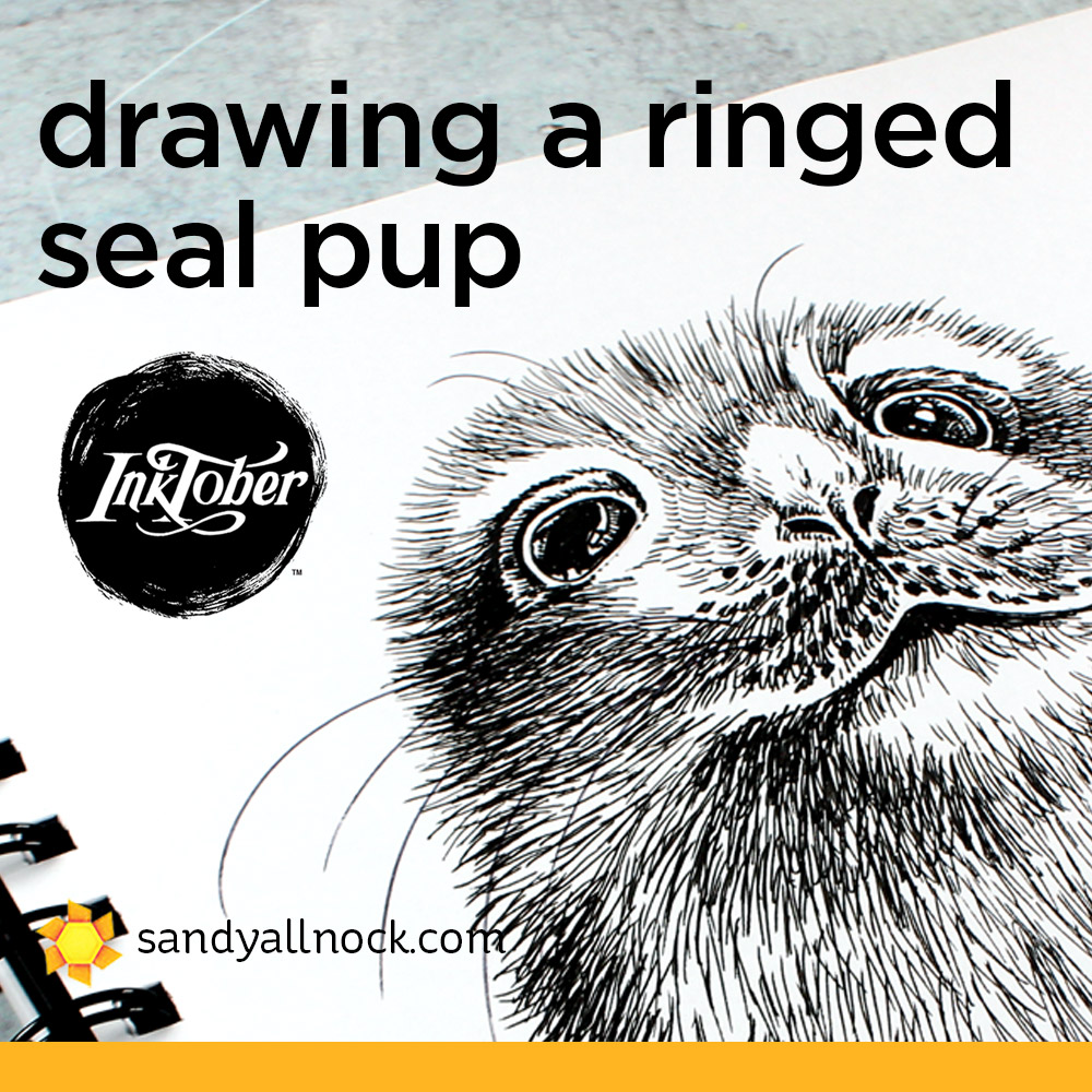 Inktober: Drawing a Baby Ringed Seal